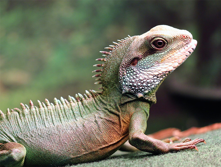 Exotic Pet Cold Weather Tips