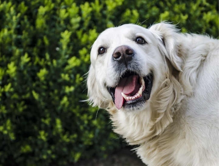 Pet Dental Disease & Dental Home Care