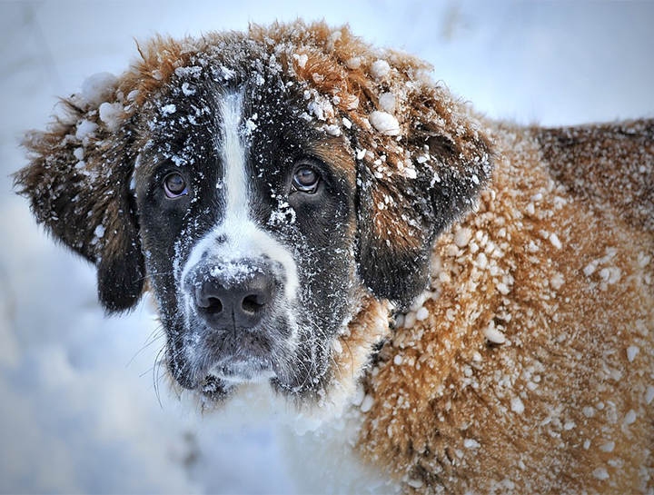 Cold Weather Pet Care
